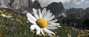 Sommerprogramm - www.bergschule-vips.com